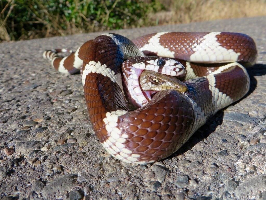 yılan hikayesi