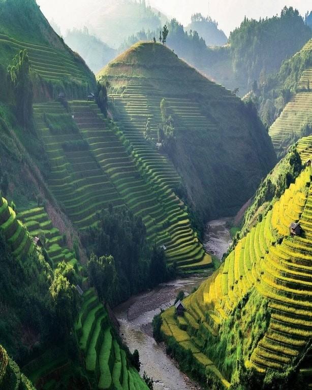 vietnam'da pirinç tarlaları