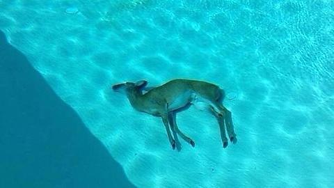 havuzun içinde gizem dolu bir ölüm