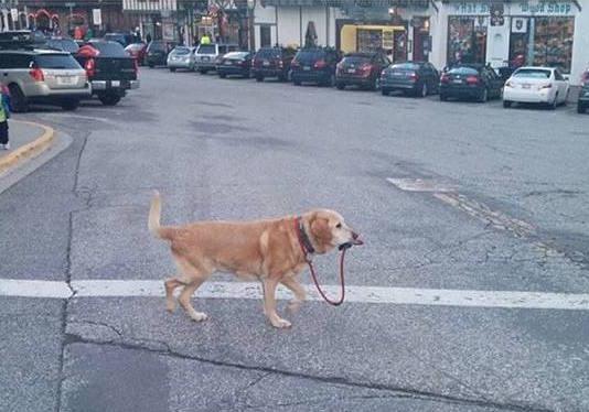 kendi başının çaresine bakan köpek