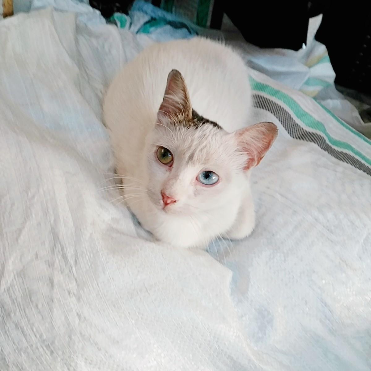 bu van kedisinin adı ne olsun? :)