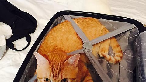 bu fotoğrafta 2 kedi var