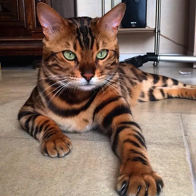 kedi hepimizden daha karizma kabul edelim