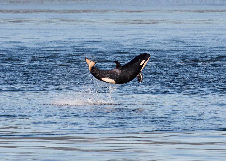 bebek balina çok mutlu