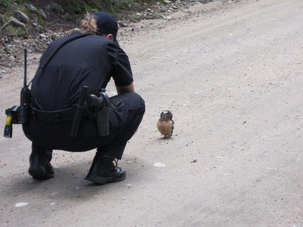 görgü tanıklığına başvurulan minik baykuş