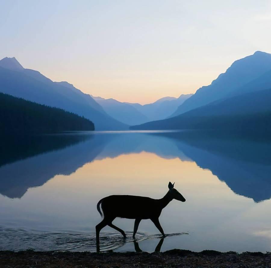 günümüzde az kalan doğal yaşam parklarından bir görünüm